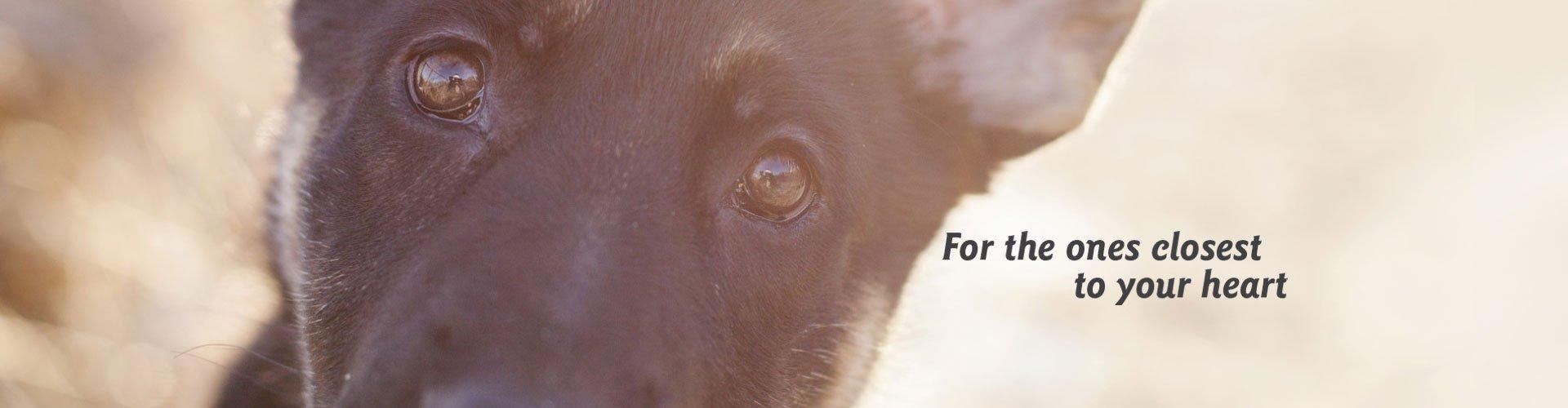 low cost pet shots walgreens shotvet